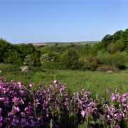 Dittiscombe Holiday Cottages, South Devon