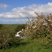 The Orchard at Dittiscombe, Slapton