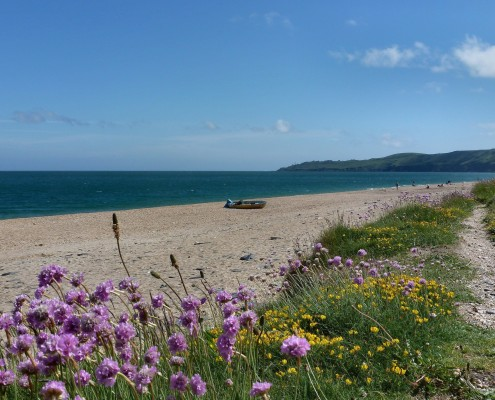 Beesands Beach wildflowers, South Devon