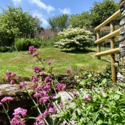 Buddleia garden at Dittiscombe Holiday Cottages