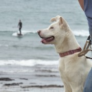 Dog friendly beaches near dittiscombe