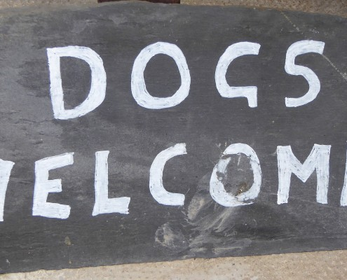 Dogs Welcome at Dittiscombe