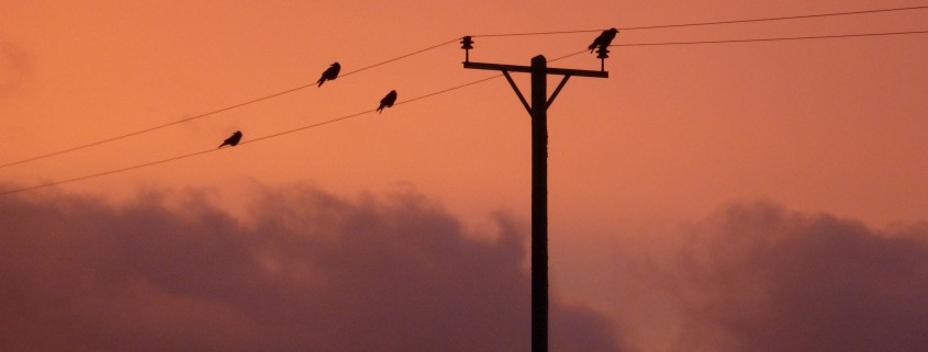 Starling sunrise at Dittiscombe