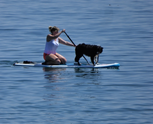 Paddleboarding in Start Bay, South Devon