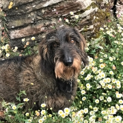 Dog friendly gardens at Dittiscombe