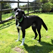 Dog friendly Dittiscombe Holiday Cottages