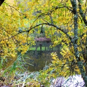 Dittiscombe valley lake in the Autumn