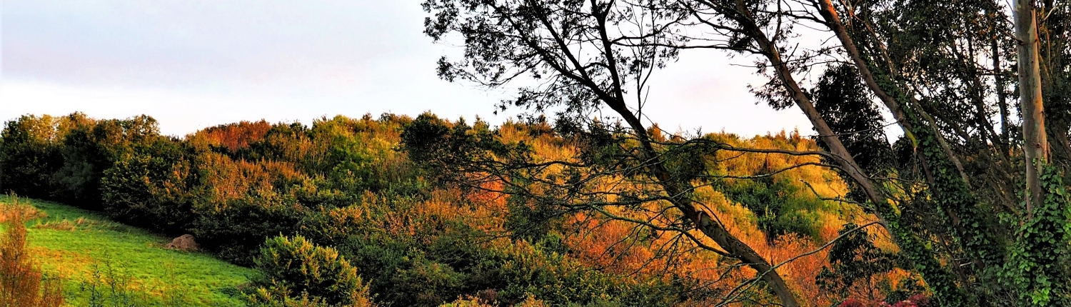 Autumn colours, Dittiscombe valley, South Devon