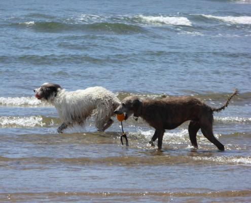 Dog friendly beaches in South Devon