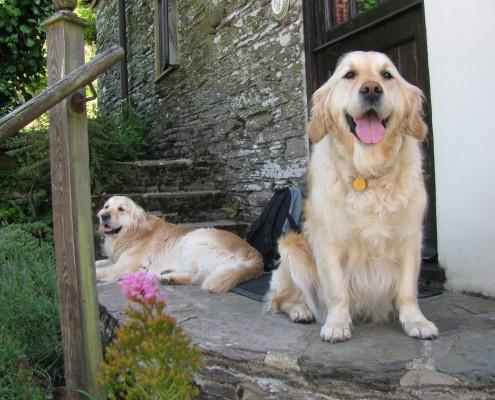 Buddleia cottage dog friendly