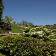 Dovecote gardens, Dittiscombe