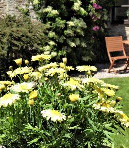 Rafters Garden, Dittiscombe