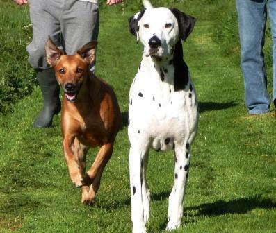Dog Friendly Dittiscombe