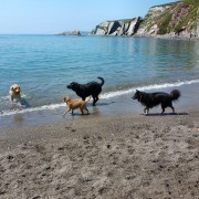 Dogs on the Beach, South Devon