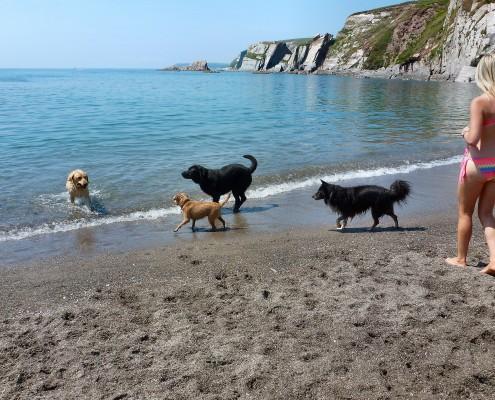 Dogs on the Beach, South Devon