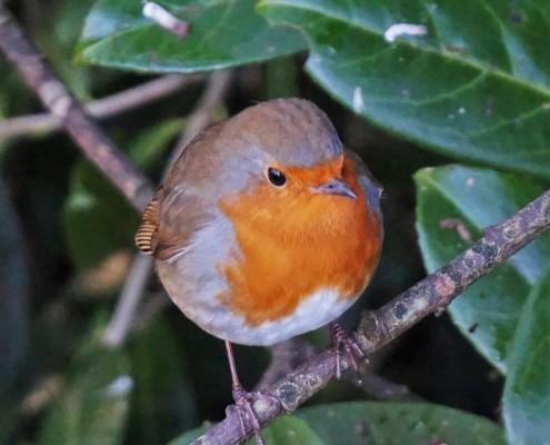 Birdwatching opportunities in South Devon