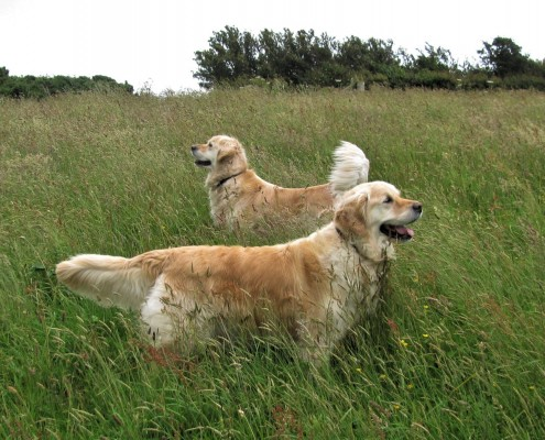 Dogs welcome at Dittiscombe South Devon