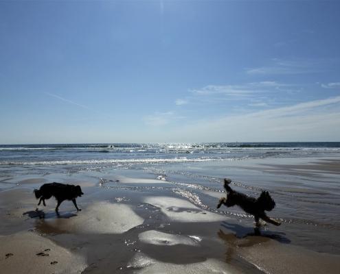 South Devon beautiful beaches