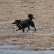 Plenty of dog-friendly beaches in South Devon