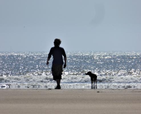 Dog-friendly beaches South Devon