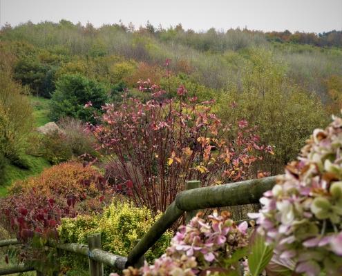 Autumn in Dittiscombe valley, South Devon