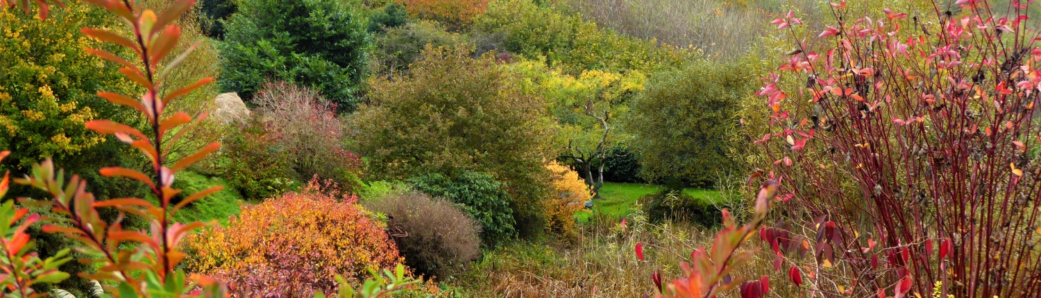 Autumn colours at Dittiscombe Holiday Cottages, South Devon