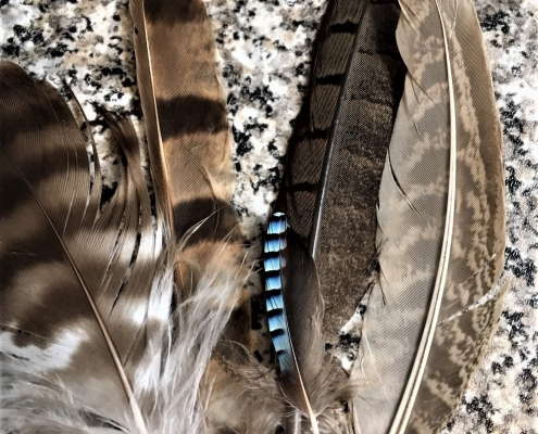 Feathers at Dittiscombe