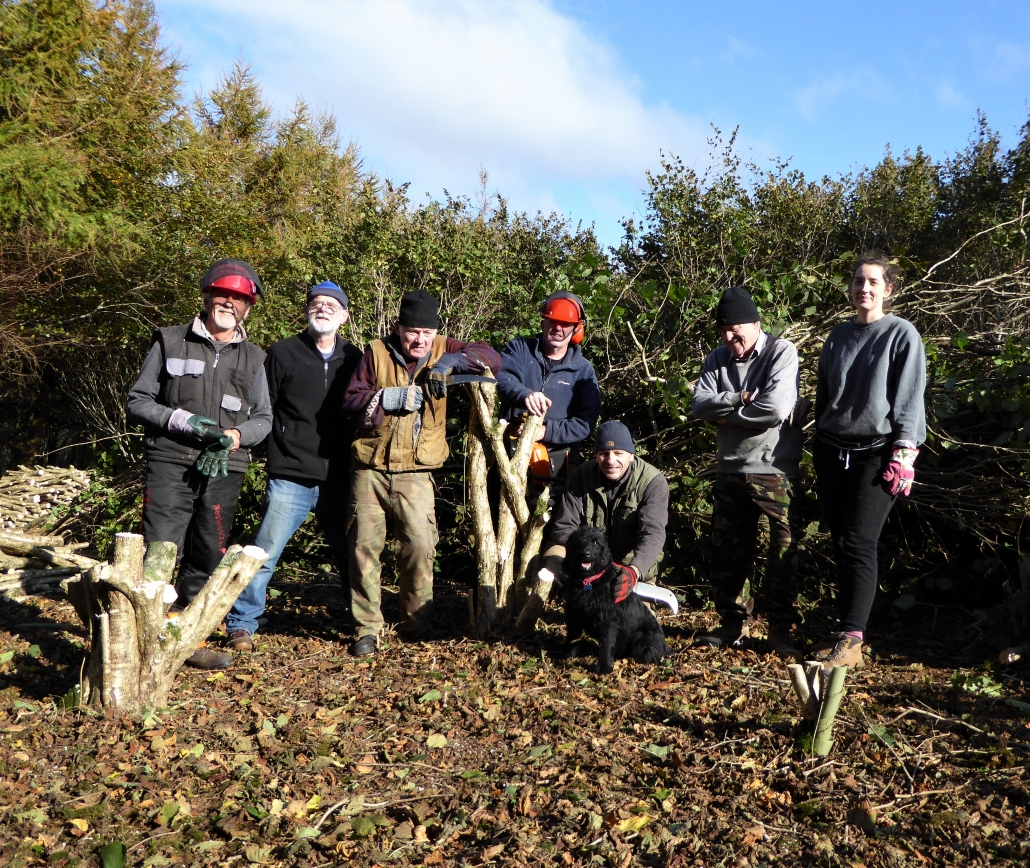 Coppicing on Dittiscombe Estate
