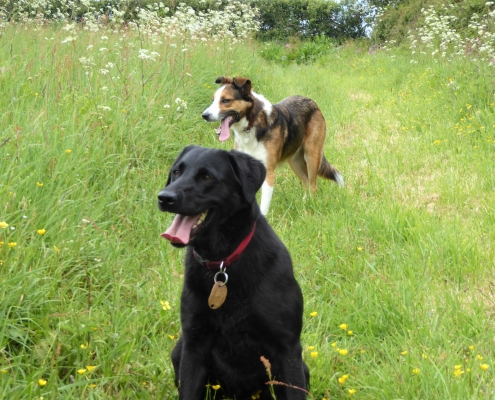 Dogs welcome with room to play at Dittiscombe Cottages