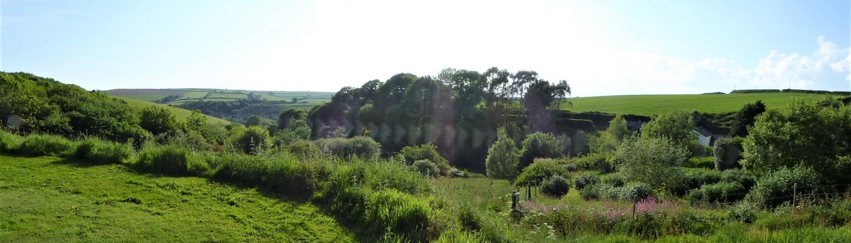 Rewilding at Dittiscombe Hills Estate & Cottages