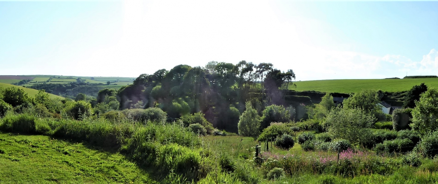 Rewilding at Dittiscombe Hills Estate & Cottages