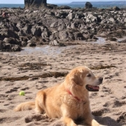 Dog friendly beach at South Milton Sands, South Devon