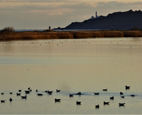 Wildfowl settled for the night on Slapton Ley