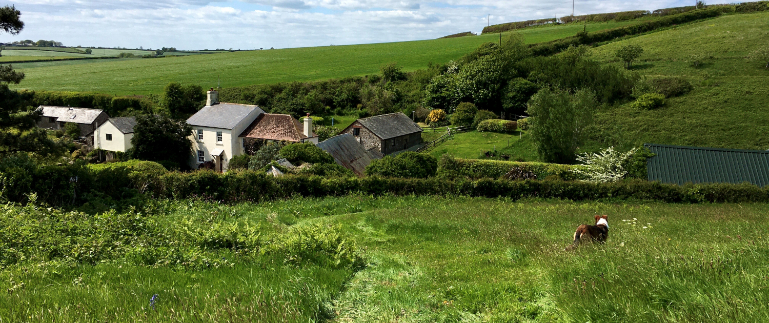 Dog Friendly Dittiscombe Estate & Cottages