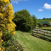 Buddleia cottage garden at Dittiscombe