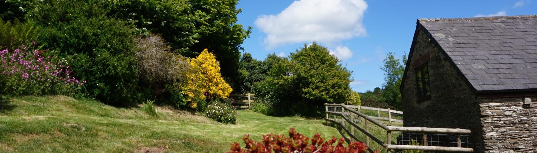 Buddleia cottage garden