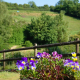 Gardens and Grounds at Dittiscombe Estate & Cottages