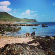 One of many beautiful beaches in the South Hams