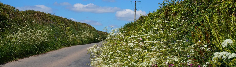 Lanes near Dittiscombe Estate