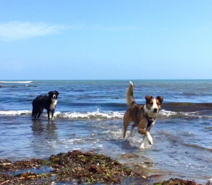 Dog Friendly Holidays at Dittiscombe