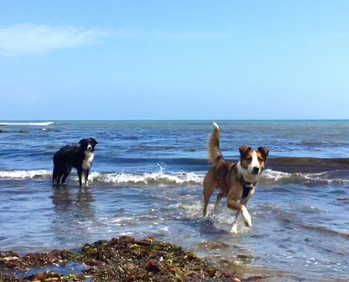 Dog Friendly Holidays at Dittiscombe