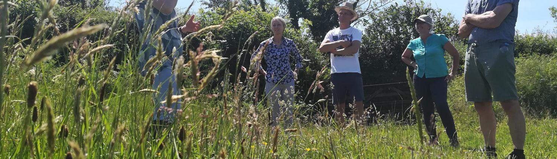Rewilding walks and talks at Dittiscombe Estate